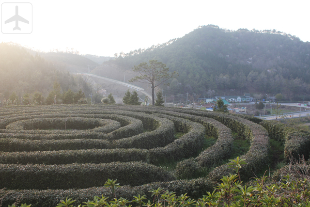 Other than Seoul, you could consider visiting the South Korean countryside such as Boseong, home to the Daehan Dawon Tourist Tea Plantation (Boseong Green Tea Plantation) and Golmangtae Pension.