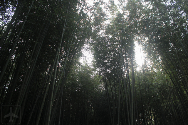 Other than Seoul, you could consider visiting the South Korean countryside such as Damyang, home to the Juknokwon (Bamboo Garden).