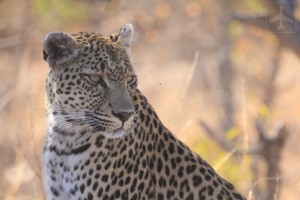South Africa Safari: Private Game Reserve or Kruger?