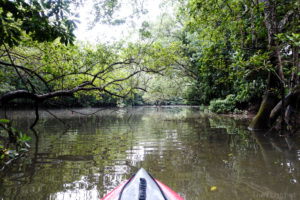 Explore Singapore #4: Kayaking at the Sungei Khatib Bongsu Mangroves